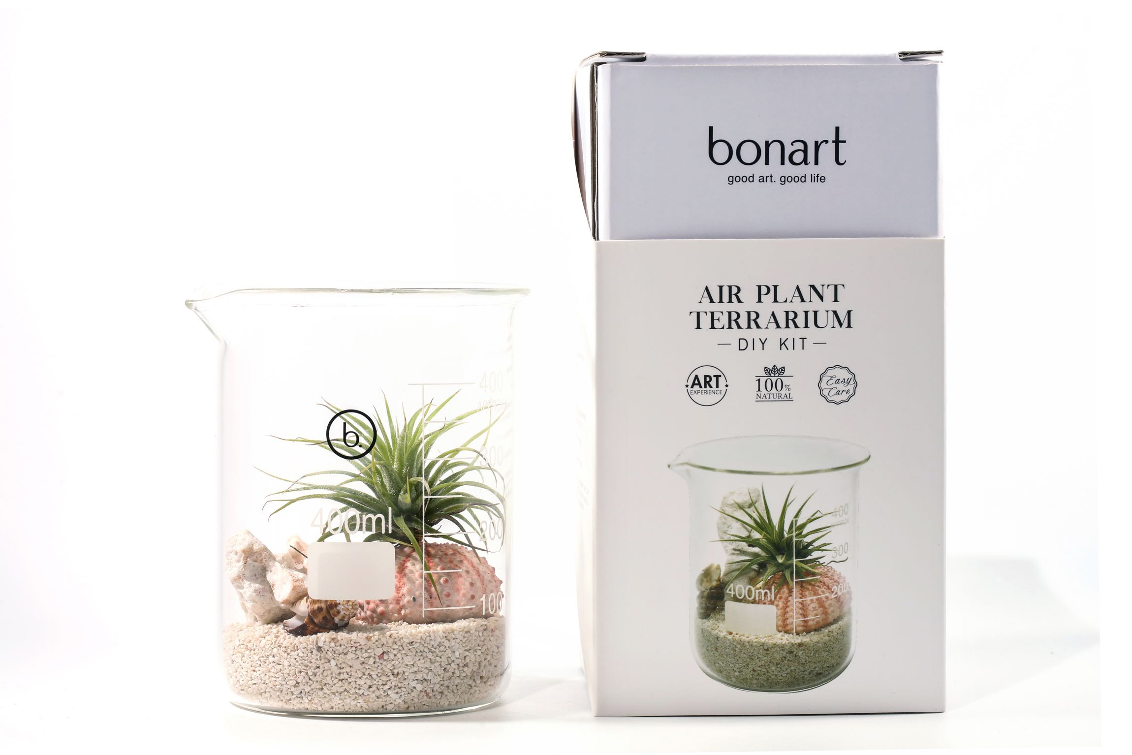 Air Plant Terrarium Diy Kit Bonart Group